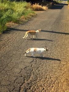 茶白猫♂と三毛猫♀