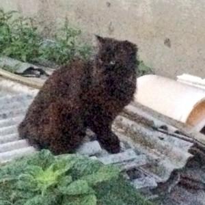 夕暮れの田んぼ。そしてオマケの黒ネコ。