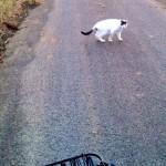 帰り道のネコたち