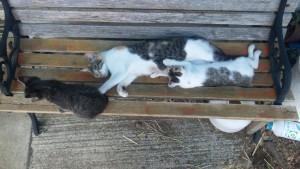 ベンチに猫