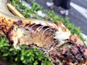 食彩館 鮎の塩焼き