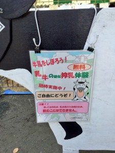 小田原農業まつり 擬似乳搾り体験